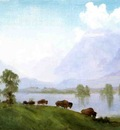 Bierstadt Albert Buffalo Country
