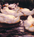 Six Ducks in the Pond