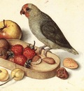 FLEGEL Georg Still Life With Pygmy Parrot