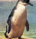 Marks Henry Stacy Study Of A Penguin