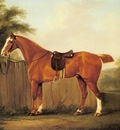 Sartorius John Nost A Chestnut Hunter Tethered To A Fence