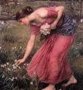 Narcissus JW