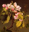 Apple Blossoms CGF