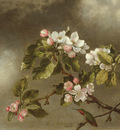 Heade Martin Johnson Hummingbird And Apple Blossoms
