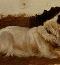 Landseer Sir Edwin Henry Study Of A Chow