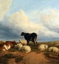 Cooper Thomas Sidney Canterbury Meadows