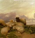 Cooper Thomas Sidney Sheep In Canterbury Water Meadows