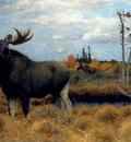 Kuhnert Wilhelm Elks In A Marsh Landscape
