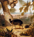 Daniell William Musk Deer And Birds Of Paradise