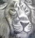 mi tierno rey león