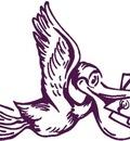 Wise Pelican